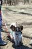 Наши собаки из канис-класса